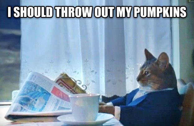 Sophisticated Cat i should throw out my pumpkins  , made with livememe meme maker