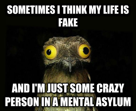 Weird Stuff I Do Potoo sometimes i think my life is fake and i m just some crazy person in a mental asylum , made with livememe meme creator