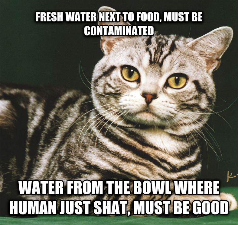 Cat Logic Food Bowl