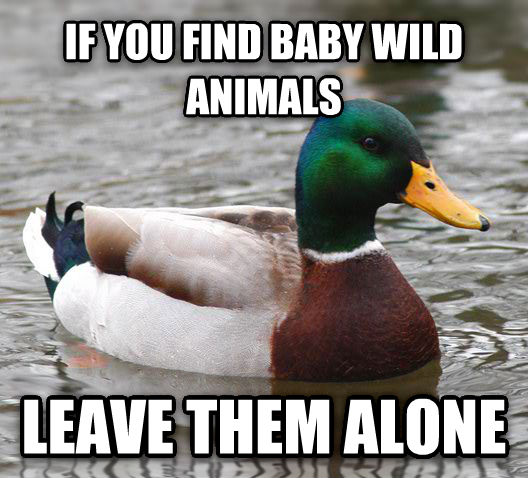Actual Advice Mallard if you find baby wild animals leave them alone , made with livememe meme generator