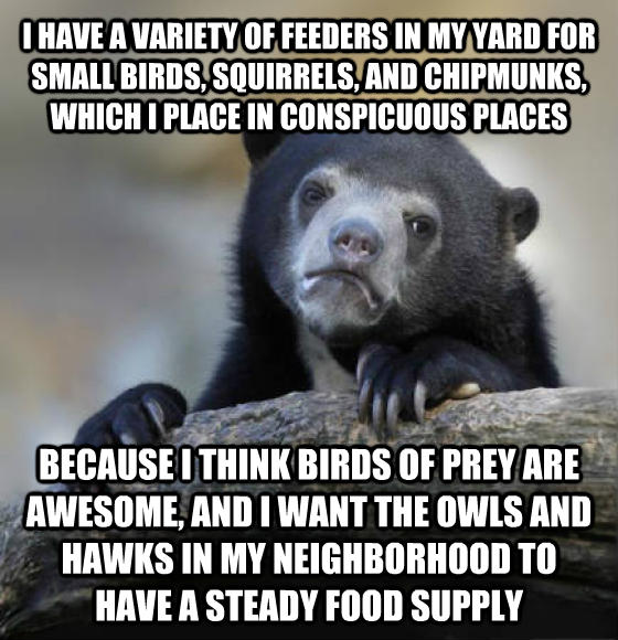 Confession Bear i have a variety of feeders in my yard for small birds, squirrels, and chipmunks, which i place in conspicuous places because i think birds of prey are awesome, and i want the owls and hawks in my neighborhood to have a steady food supply , made with livememe meme creator