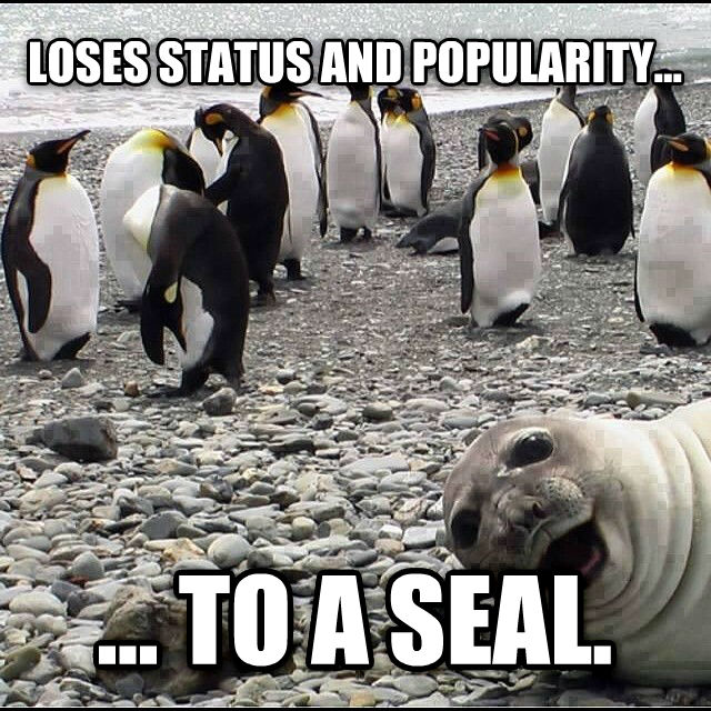 Awkward Penguin, Awesome Seal  loses status and popularity... ... to a seal. , made with livememe meme generator