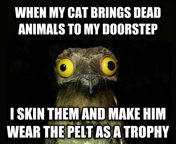 Weird Stuff I Do Potoo when my cat brings dead animals to my doorstep i skin them and make him wear the pelt as a trophy , made with livememe meme creator