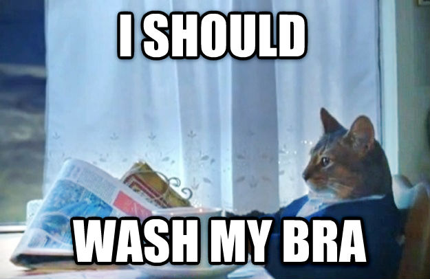 Sophisticated Cat i should  wash my bra , made with livememe meme creator