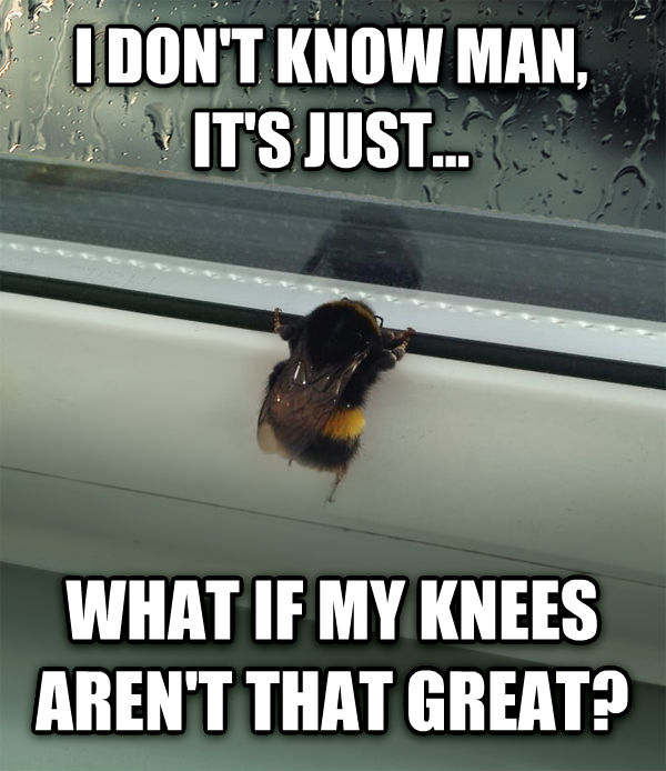 Sad Bee i don t know man, it s just... what if my knees aren t that great? , made with livememe meme maker