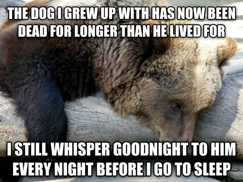 Depression Bear the dog i grew up with has now been dead for longer than he lived for i still whisper goodnight to him every night before i go to sleep , made with livememe meme creator
