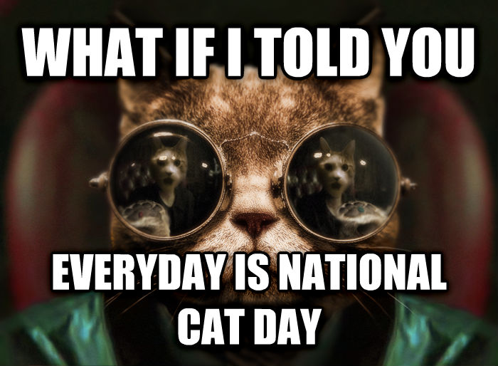 Morpheus Cat Facts what if i told you  everyday is national cat day  , made with livememe meme creator