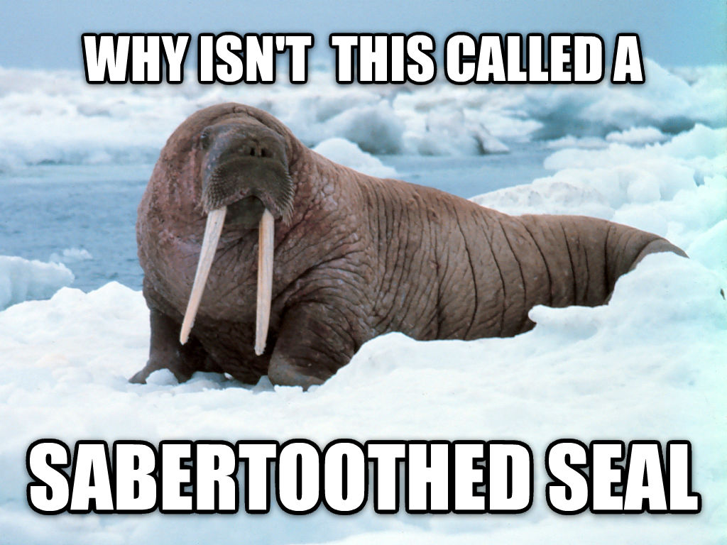 Sounds more badass than walrus why isn t  this called a sabertoothed seal , made with livememe meme generator