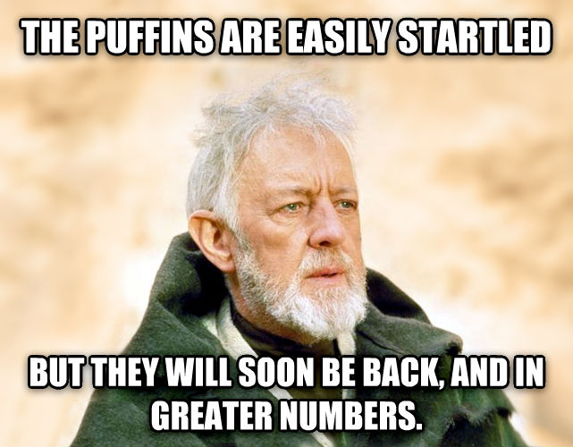 Obi Wan Kenobi - Now, That s a Name I ve Not Heard in a Long Time the puffins are easily startled but they will soon be back, and in greater numbers. , made with livememe meme maker
