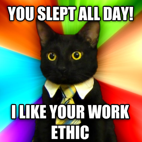 Business Cat you slept all day! i like your work ethic  , made with livememe meme maker