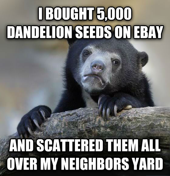 Confession Bear i bought 5,000 dandelion seeds on ebay and scattered them all over my neighbors yard , made with livememe meme maker