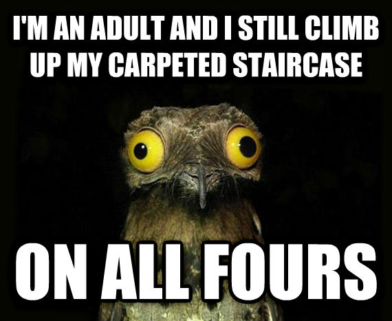 Weird Stuff I Do Potoo i m an adult and i still climb up my carpeted staircase on all fours , made with livememe meme maker