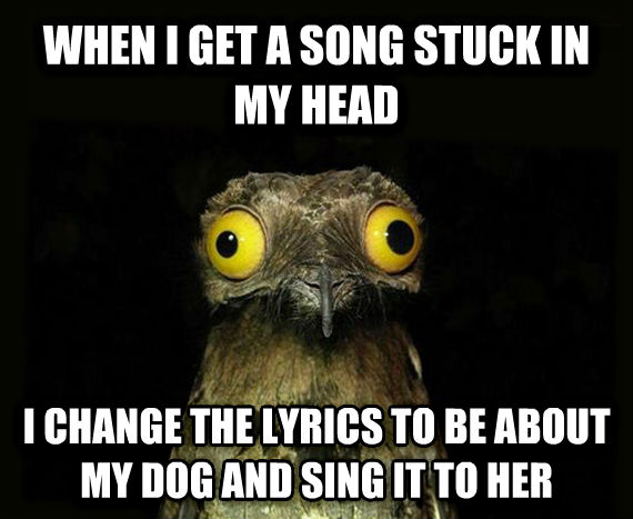 Weird Stuff I Do Potoo when i get a song stuck in my head i change the lyrics to be about my dog and sing it to her , made with livememe meme creator