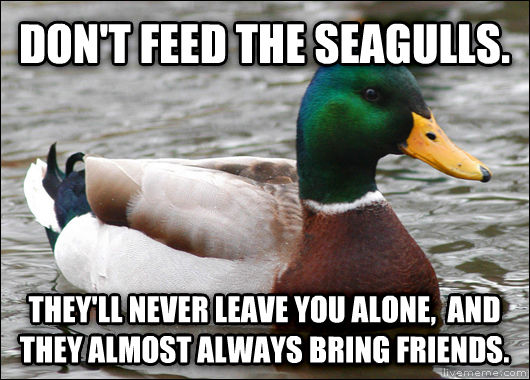Actual Advice Mallard don t feed the seagulls. they ll never leave you alone,  and they almost always bring friends. , made with livememe meme creator