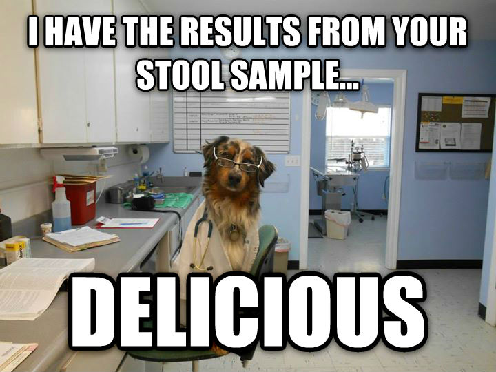 Doctor Dog i have the results from your stool sample... delicious , made with livememe meme maker
