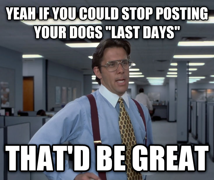 Office Space Lumbergh yeah if you could stop posting your dogs  last days  that d be great , made with livememe meme creator
