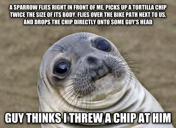 Uncomfortable Situation Seal a sparrow flies right in front of me, picks up a tortilla chip twice the size of its body, flies over the bike path next to us, and drops the chip directly onto some guy s head guy thinks i threw a chip at him , made with livememe meme creator