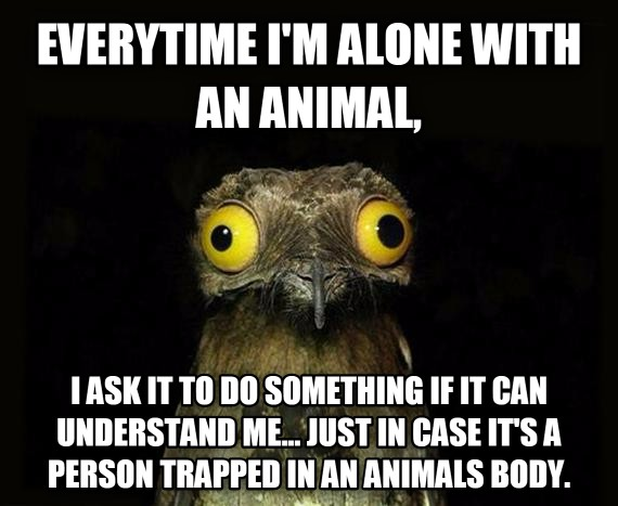 everytime i m alone with an animal, i ask it to do something if it can understand me... just in case it s a person trapped in an animals body. , made with livememe meme maker