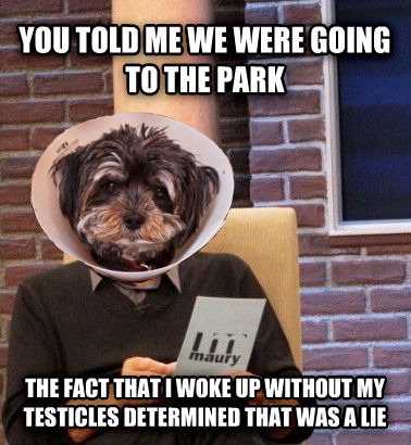 Dog Lie you told me we were going to the park the fact that i woke up without my oranges determined that was a lie , made with livememe meme creator