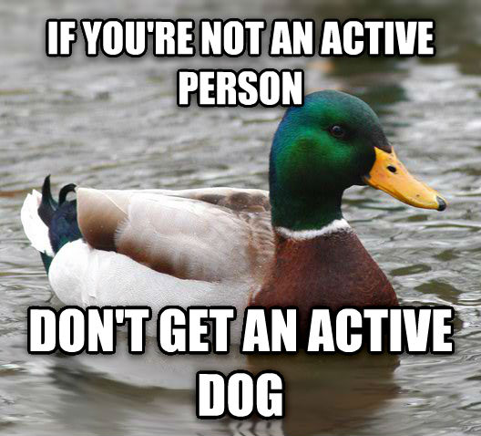 Actual Advice Mallard if you re not an active person don t get an active dog , made with livememe meme creator