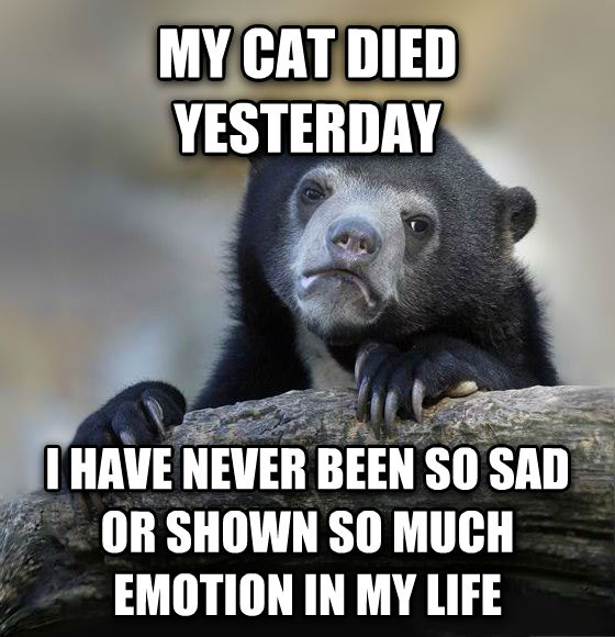 Confession Bear my cat died yesterday i have never been so sad or shown so much emotion in my life , made with livememe meme creator