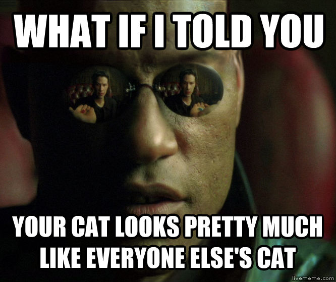 What If Morpheus Told You what if i told you your cat looks pretty much like everyone else s cat , made with livememe meme generator