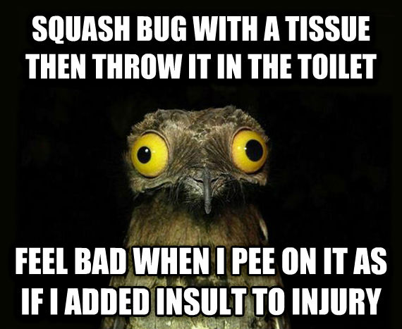 Weird Stuff I Do Potoo squash bug with a tissue then throw it in the toilet feel bad when i pee on it as if i added insult to injury , made with livememe meme maker