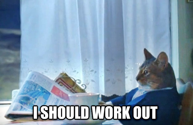 Sophisticated Cat  i should work out , made with livememe meme generator