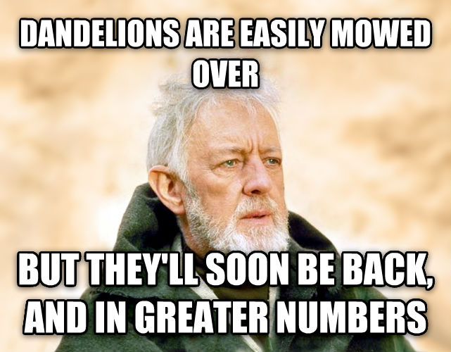 Obi Wan Kenobi - Now, That s a Name I ve Not Heard in a Long Time dandelions are easily mowed over but they ll soon be back, and in greater numbers , made with livememe meme creator
