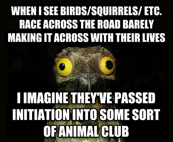 Weird Stuff I Do Potoo when i see birds/squirrels/ etc. race across the road barely making it across with their lives i imagine they ve passed initiation into some sort of animal club , made with livememe meme generator