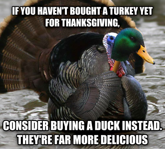 Actual Advice Turke- I mean... Mallard if you haven t bought a turkey yet for thanksgiving, consider buying a duck instead. they re far more delicious , made with livememe meme generator