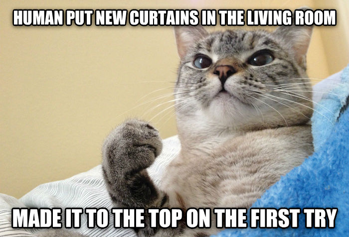 Success Cat human put new curtains in the living room made it to the top on the first try , made with livememe meme generator