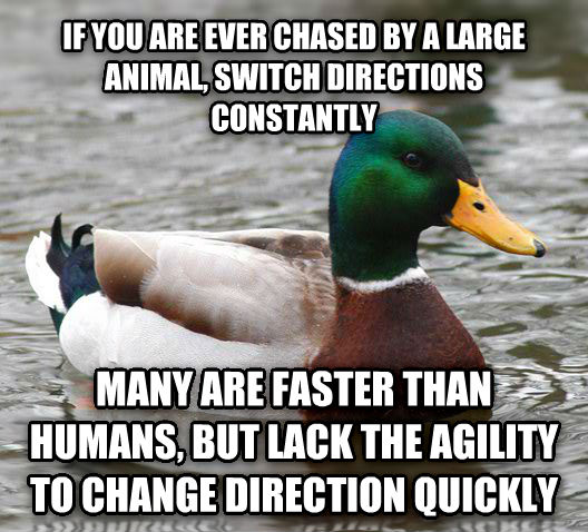 Actual Advice Mallard if you are ever chased by a large animal, switch directions constantly many are faster than humans, but lack the agility to change direction quickly , made with livememe meme maker