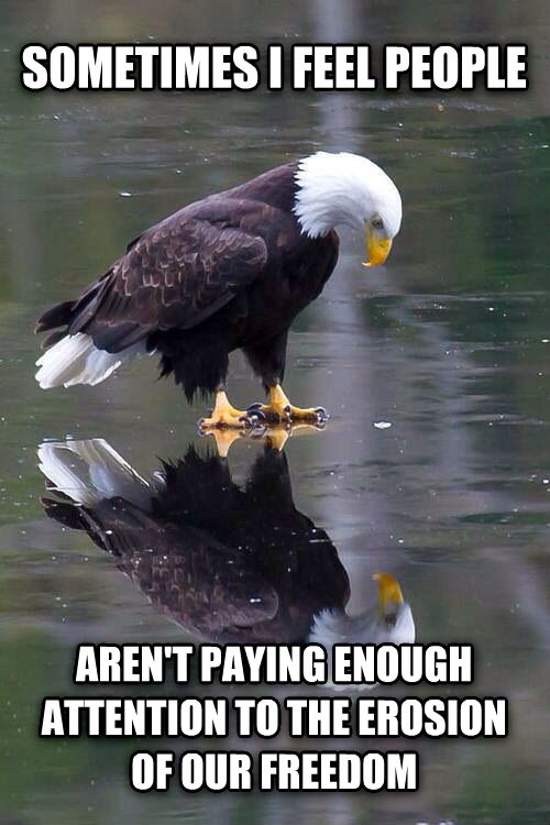 Contemplative Eagle sometimes i feel people aren t paying enough attention to the erosion of our freedom , made with livememe meme generator