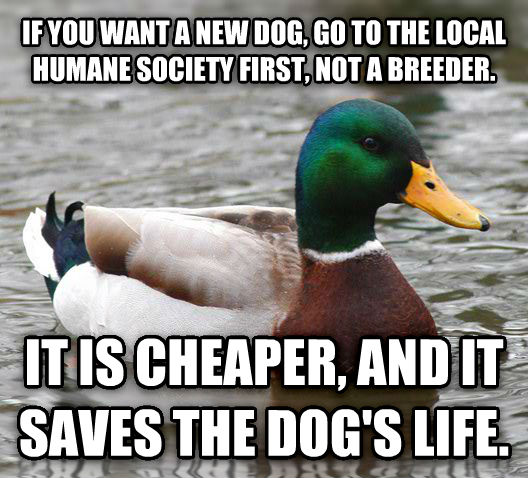 Actual Advice Mallard if you want a new dog, go to the local humane society first, not a breeder. it is cheaper, and it saves the dog s life. , made with livememe meme creator