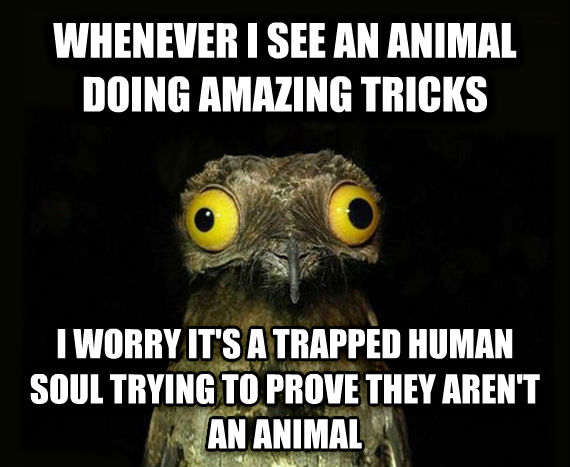 Weird Stuff I Do Potoo whenever i see an animal doing amazing tricks i worry it s a trapped human soul trying to prove they aren t an animal , made with livememe meme maker