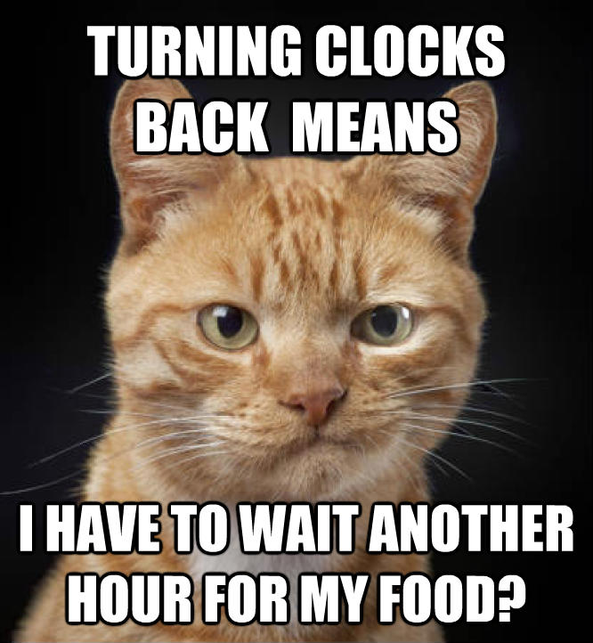 Disappointed Cat turning clocks back  means i have to wait another hour for my food?   , made with livememe meme maker
