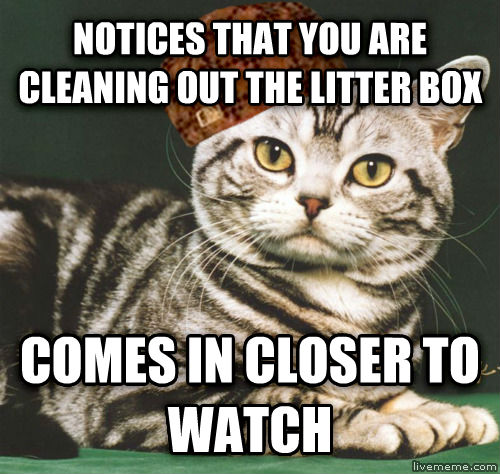 SCUMBAG CAT notices that you are cleaning out the litter box comes in closer to watch , made with livememe meme maker
