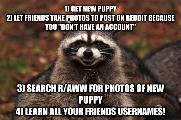 Evil Plotting Raccoon 1) get new puppy 2) let friends take photos to post on reddit because you  don t have an account  3) search r/aww for photos of new puppy  4) learn all your friends usernames! , made with livememe meme maker