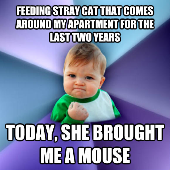 Success Kid feeding stray cat that comes around my apartment for the last two years today, she brought me a mouse  , made with livememe meme creator