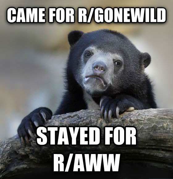 Confession Bear came for r/gonewild stayed for r/aww , made with livememe meme generator