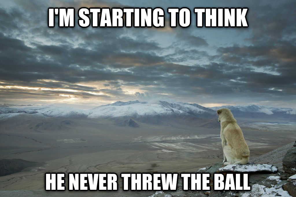 Contemplative Dog i m starting to think he never threw the ball , made with livememe meme creator