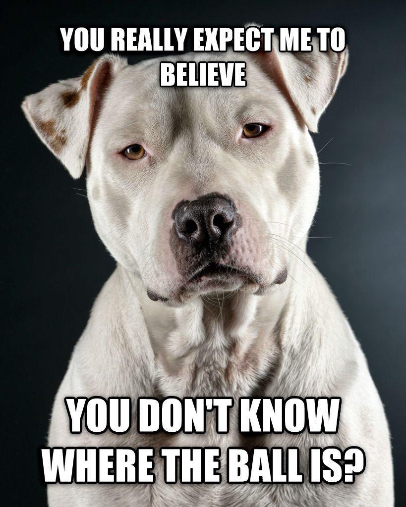 Incredulous Dog you really expect me to believe you don t know where the ball is? , made with livememe meme creator