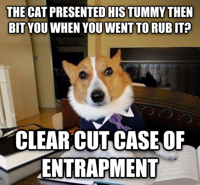 Lawyer Dog the cat presented his tummy then bit you when you went to rub it? clear cut case of entrapment , made with livememe meme maker