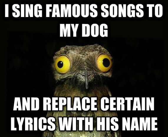 Weird Stuff I Do Potoo i sing famous songs to my dog and replace certain lyrics with his name , made with livememe meme maker