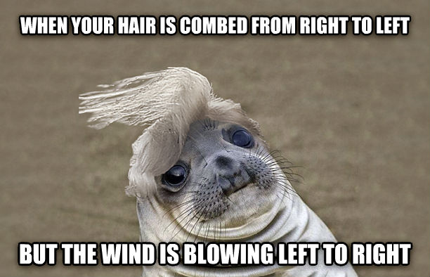 Uncomfortable Hair Seal when your hair is combed from right to left but the wind is fanning left to right , made with livememe meme creator