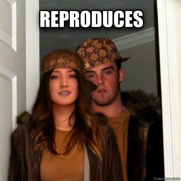 Scumbag Steve and Stephanie reproduces  , made with livememe meme creator