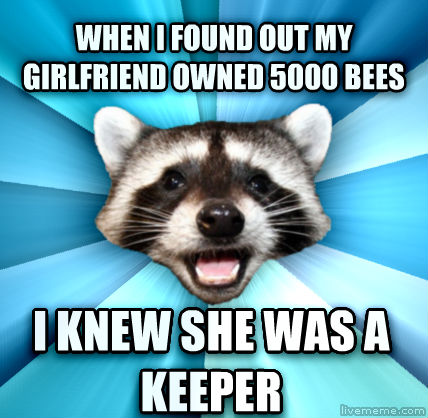 lame pun raccoon - photo #4