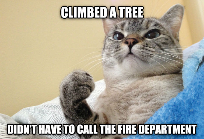 Success Cat climbed a tree didn t have to call the fire department , made with livememe meme generator