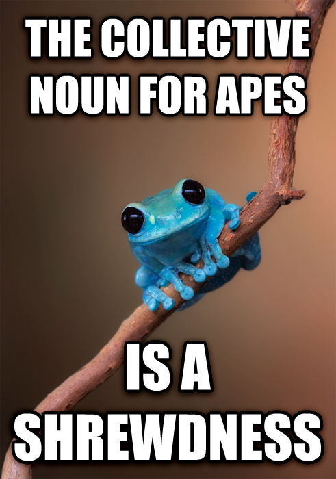 Small Fact Frog the collective noun for apes is a shrewdness , made with livememe meme maker